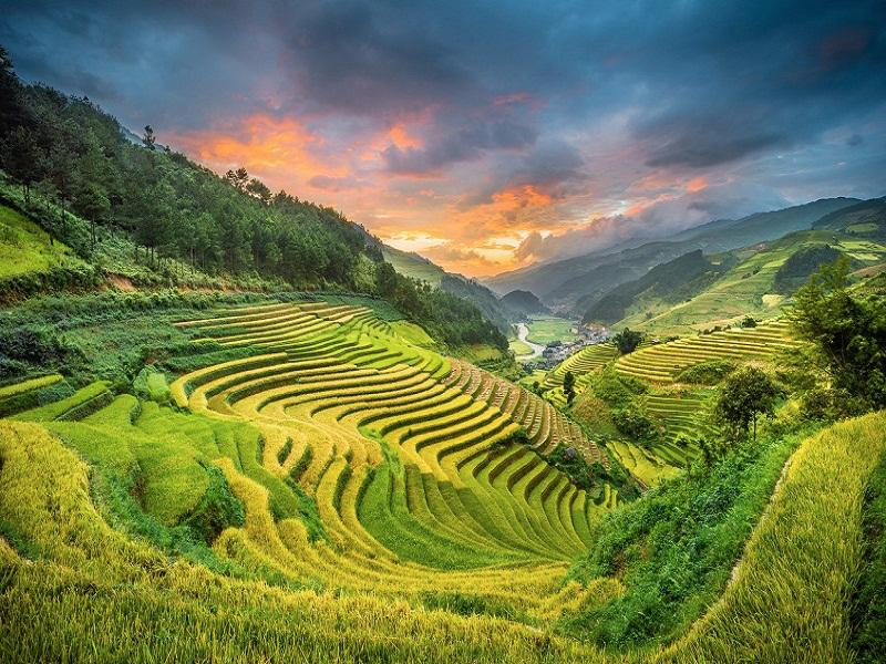 Beautiful terraces in the Summer