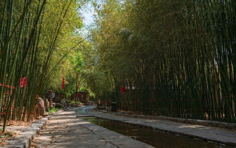 Bamboo spring tourist area