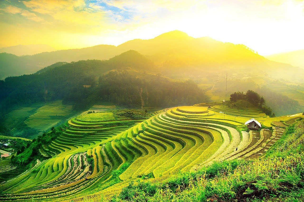 terraced fields in Ha Giang
